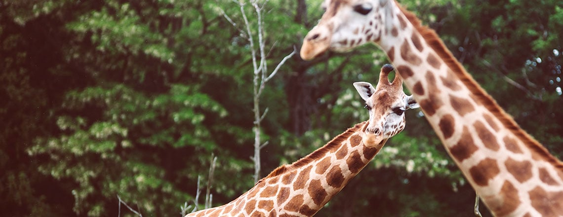 Descontos no Jardim Zoológico De Lisboa